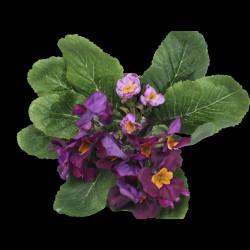 Purple primula violet stake
