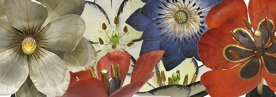 Féerie botanique